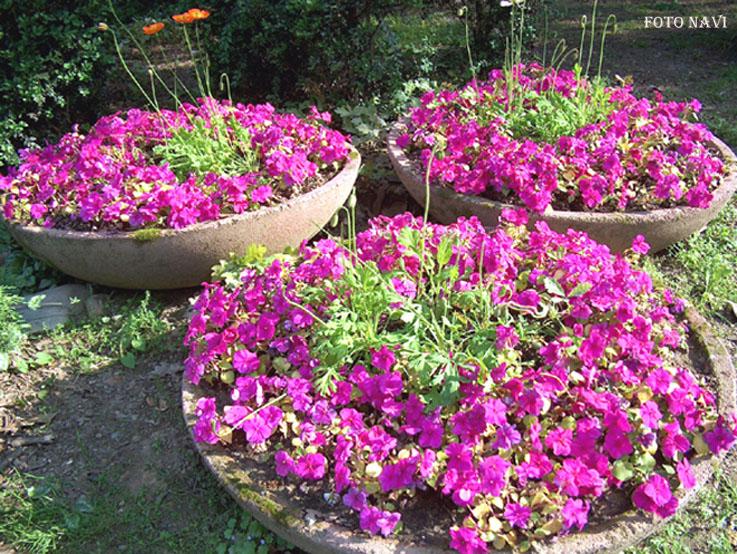 Giardino Roccioso: Giardini rocciosi foto nanopress donna. Giardini ...